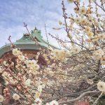 北野天満宮へ撮影旅行♡梅のお花と京菓子コレクション