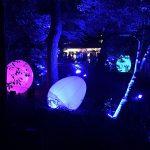 フォトジェニックが止まらない!インスタ映えしかないスゴイお祭りが登場。世界遺産を照らす「下鴨神社糺の森の光の祭」