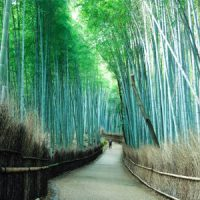 着物で嵐山を観光するならてくてく京都四条烏丸店がオススメ!その理由とは?